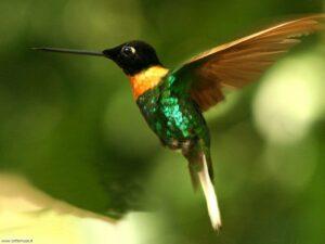 colibri concentrazione